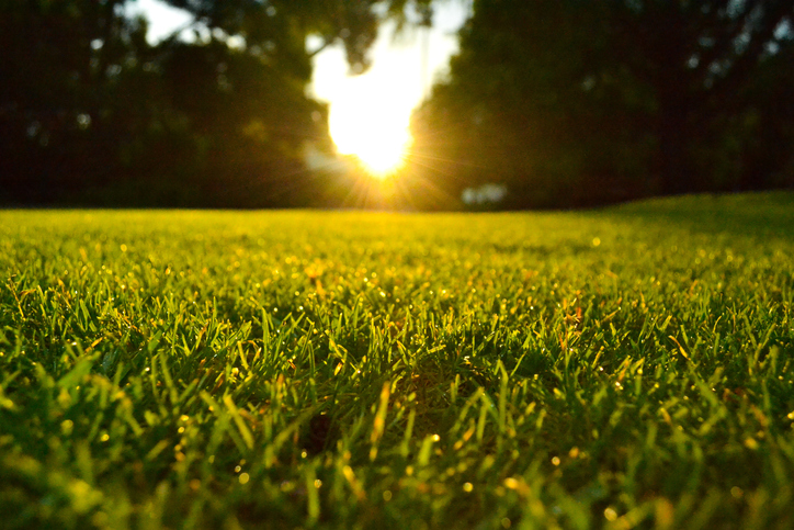 Lawn at sunset