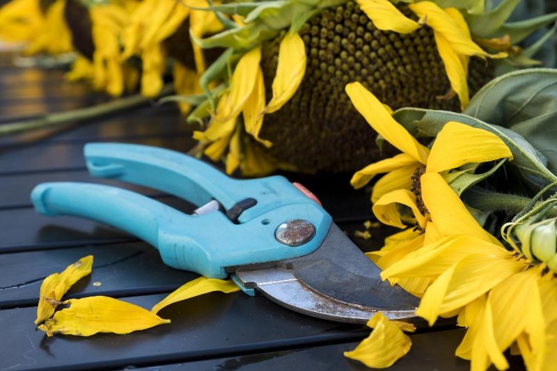 5 herramientas imprescindibles de poda