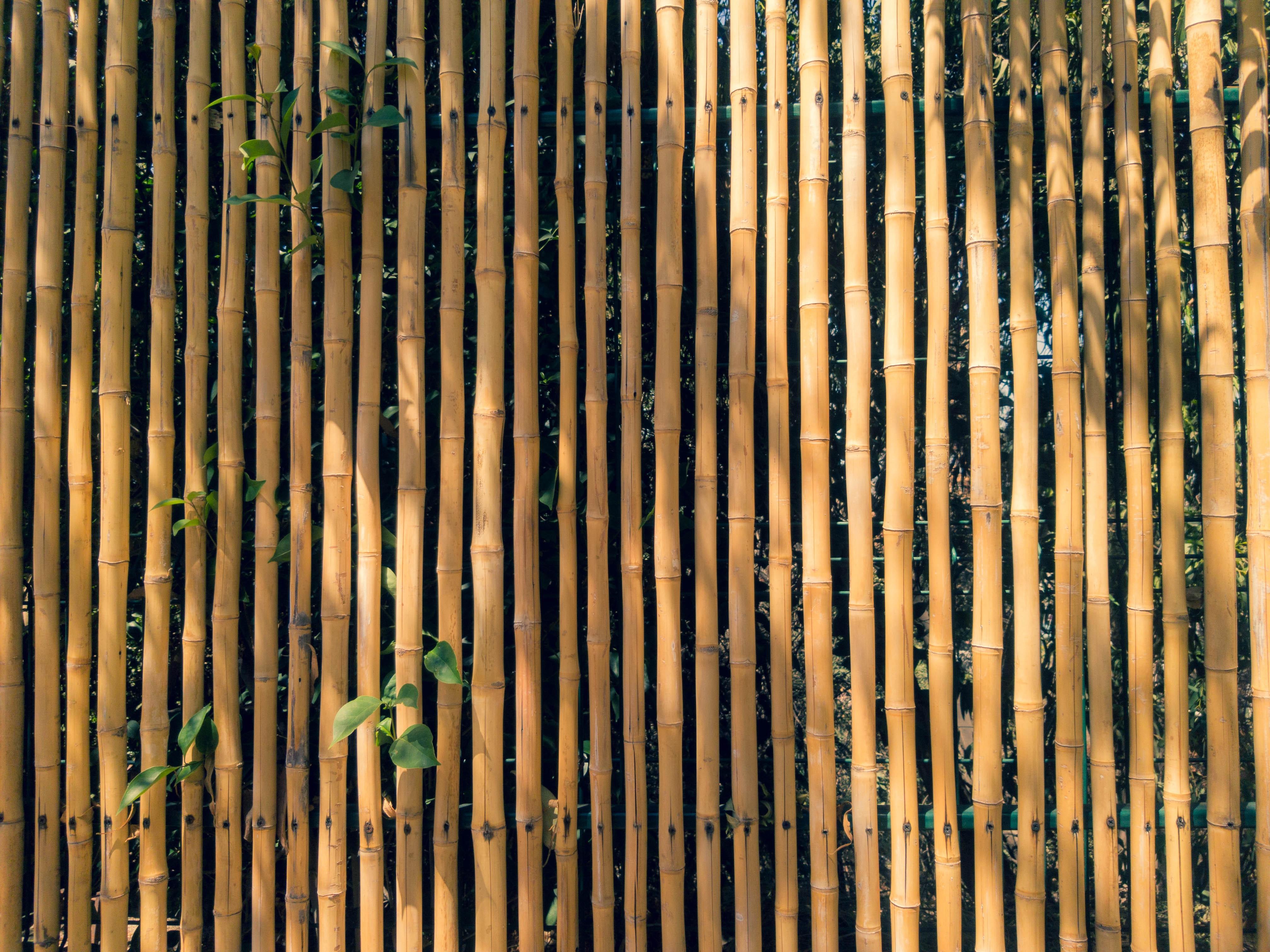 Cómo instalar cañizo de bambú en tu jardín